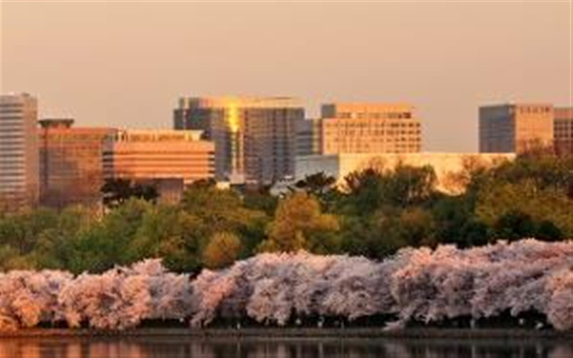 Carr Workplaces Rosslyn - Potomac Towers - Team Room for 4 People